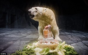 polar bear lettuce