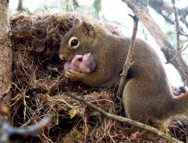 Squirrel baby lost - photo#3
