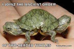 two headed turtles