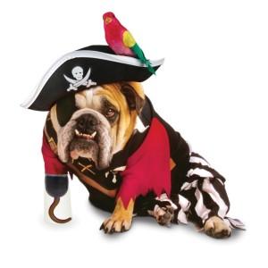 funny fourteen halloween costume dog pirate