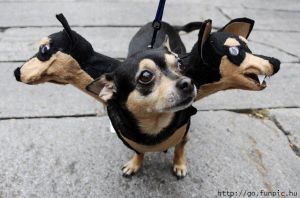 funny halloween costume eight siamese dogs