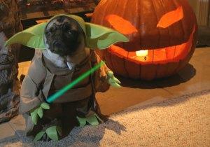 funny  halloween costume eleven dog costumes