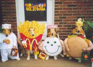 funny halloween costume five dogs