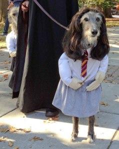 funny halloween costume nine dog