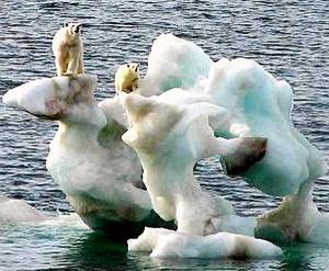 ALASKA GLOBAL WARMING ONE BEARS