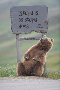alaskan stupid bear jpeg