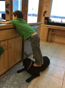 trig washing dishes while standing on dog