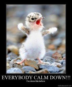 calm down five chick