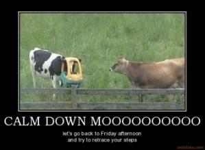 calm down one cow