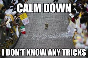 calm down six dog