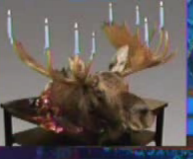 moose menorah