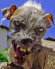 ugly dogs one
