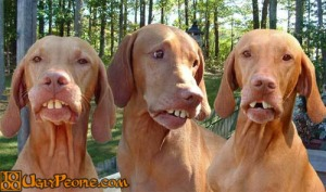 ugly dogs three