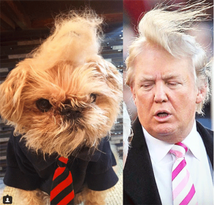 trump dog two