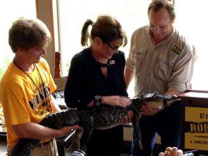 palin alligator