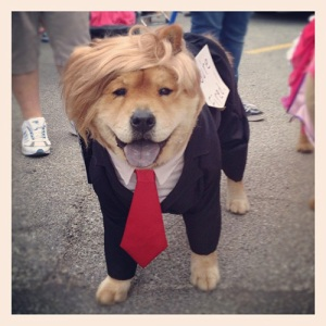 trump dog one