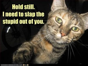palin cat slap the stupid out of you
