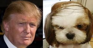 trump dog three