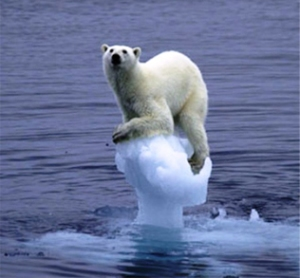 polar-bear-global-warming