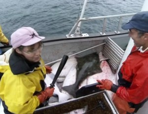 November 21, 2010: Video still from the hit TLC show Sarah Palin's Alaska. Pictured here Sarah and Todd Palin takes the girls to Homer Alaska to do some Halibut fishing. Sarah Palin and Bristol Palin club the halibut once on the boat. Credit: TLC/INFphoto.com Ref: infusny-03 IMPORTANT NOTICE: The attached image is a high-resolution video-still, supplied by Insight News & Features, Inc. (INF). INF does not own, nor does it claim to own, the copyright or any license to the image. Any fees charged by INF for the image are for the supply of the material and do not, and are not intended to, convey to the user any copyright or license rights. By accepting submission of the image, the end-user accepts the full responsibility of obtaining copyright clearance from the copyright holder prior to publication. Also, the end-user agrees to fully indemnify INF from any and all legal claims, demands or causes of action arising out of, or connected with, the user's use or publication of the image. If the end-user does not, or cannot, comply with all of the above restrictions, the image should not be used or published by that end-user.
