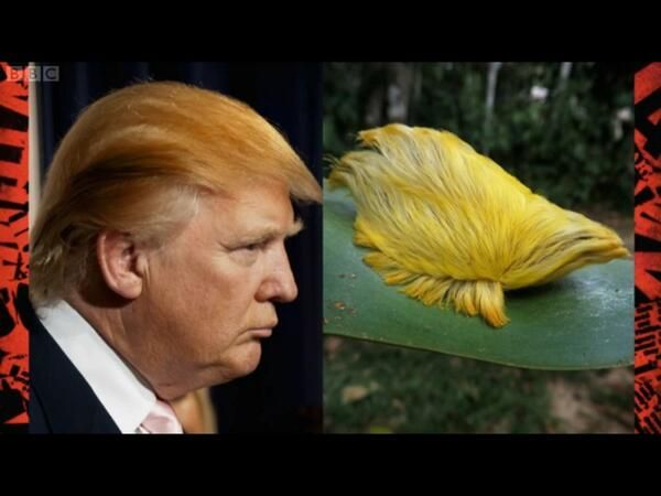 Image result for trump bug
